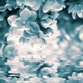 Beautiful lilac flower blossom, water reflection, light. Greeting card template. Soft vintage toned. Nature spring background Royalty Free Stock Photo