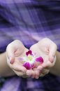 Beautiful lilac flower in woman's hands Royalty Free Stock Photo