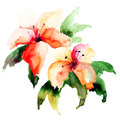 Beautiful lily flowers watercolor illustration Stock Photography