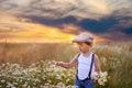 Beautiful little boy in daisy field on sunset Royalty Free Stock Photo