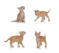 Beautiful little cat in different positions Royalty Free Stock Photo