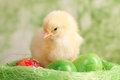 Beautiful little chicken eggs Royalty Free Stock Photography