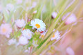 Beautiful little daisy in grass spring a meadow Royalty Free Stock Photos