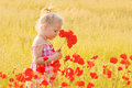 Beautiful little girl with a bouquet of red flowers stands on meadow Royalty Free Stock Images