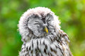 Beautiful little owl in the ligth of sping Royalty Free Stock Photo