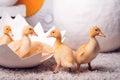 Beautiful little yellow ducklings