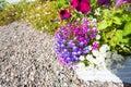 Beautiful lobelia flowers outside a house Royalty Free Stock Photo