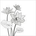 Beautiful Lotus Flower Line Il...