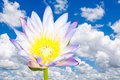 Beautiful lotus single flower with blue sky Stock Photos