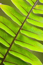 Beautiful lush fern frond Stock Images