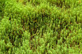 Beautiful lush green nature background Stock Image