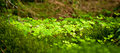 Beautiful lush green nature background Royalty Free Stock Images