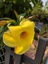 Lustrous flower Royalty Free Stock Photo