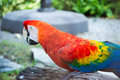 Beautiful macaw and Beautiful birds . Royalty Free Stock Photo