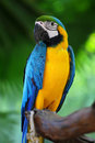 Beautiful macaw parrots nature Stock Image