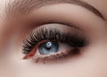 Beautiful macro shot of female eye with smoky makeup. Perfect shape of eyebrows Royalty Free Stock Photo