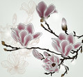 Beautiful magnolia branch Royalty Free Stock Photos