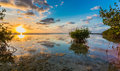 Beautiful mangrove swamp at sunset in Florida Keys Royalty Free Stock Photo