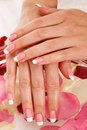 Beautiful manicure nails with roses closeup image of female hands pink french over rose petals Stock Images