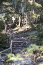 Manmade Stone Stairs in the Forest Royalty Free Stock Photo