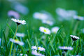 Beautiful meadow - details Stock Photography