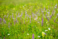 Beautiful meadow field with wild flowers.