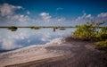 Beautiful Merritt Island preserve ponds at dawn Royalty Free Stock Photo