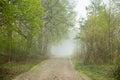 Beautiful misty day Royalty Free Stock Photo