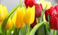 Beautiful mix vivid multicolored tulips Stock Images