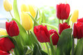 Beautiful mix vivid multicolored tulips Royalty Free Stock Image