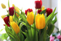 Beautiful mix vivid multicolored tulips Stock Photos