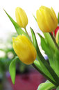 Beautiful mix vivid multicolored tulips Stock Photography