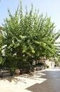 Monastery Panagyia Kaliviani courtyard garden from Mires in Crete island of Greece