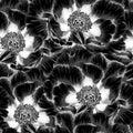 Beautiful monochrome, black and white seamless background with flowers Plant Paeonia arborea (Tree peony)