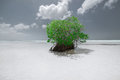 Beautiful monochrome of a lonely green tree standing in the shallow ocean water near the beach Royalty Free Stock Photo