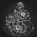 Beautiful monochrome vector floral bouquet of lotus flowers Royalty Free Stock Photo
