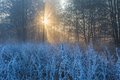Beautiful morning with frost on plants autumnal landscape at sunrise frozen wild meadow and warm sunlight at cold first signs of Stock Photo