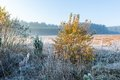 Beautiful morning with frost on plants autumnal landscape at sunrise frozen wild meadow and warm sunlight at cold first signs of Royalty Free Stock Images