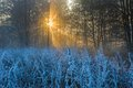 Beautiful morning with frost on plants autumnal landscape at sunrise frozen wild meadow and warm sunlight at cold first signs of Stock Photos