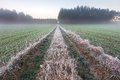 Beautiful morning with frost on plants autumnal landscape at sunrise frozen wild meadow and warm sunlight at cold first signs of Royalty Free Stock Image
