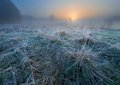 Beautiful morning with frost on plants autumnal landscape at sunrise frozen wild meadow and warm sunlight at cold first signs of Stock Image