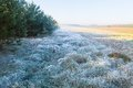 Beautiful morning with frost on plants autumnal landscape at sunrise frozen wild meadow and warm sunlight at cold first signs of Stock Photography