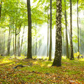 Beautiful morning in green forest Royalty Free Stock Image