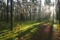 Beautiful morning light Royalty Free Stock Photo