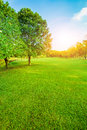 Beautiful morning light in public park with green grass field ve Royalty Free Stock Photo