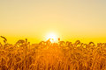 Beautiful morning sunrise over a field Royalty Free Stock Photo