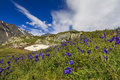 Beautiful mountain landscape with flowers and blue sky Royalty Free Stock Image