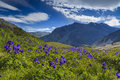 Beautiful mountain landscape with flowers and blue sky Stock Photos