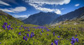 Beautiful mountain landscape with flowers and blue sky Royalty Free Stock Photos