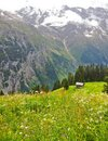 Beautiful Murren Landscape view, Summer Mountain Cottage with Lauterbrunnen Valley and Swiss Alps in background, Jungfrau region